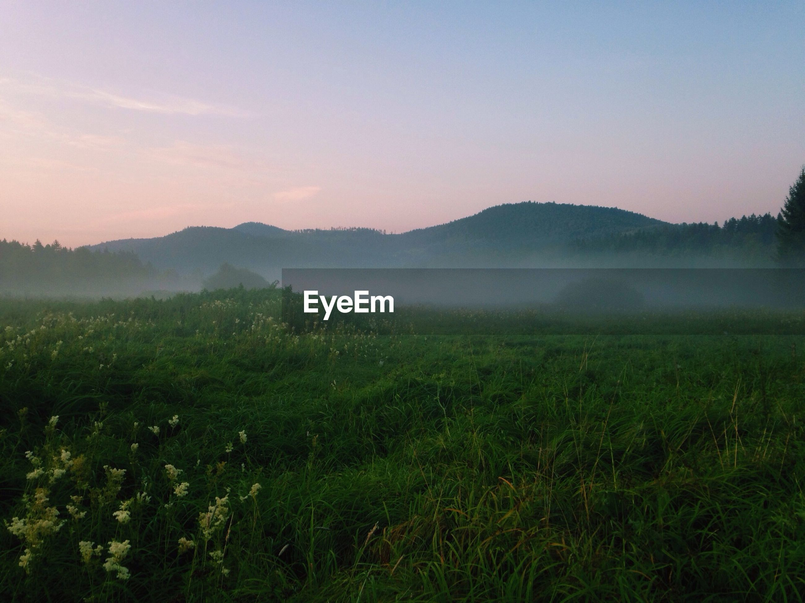 tranquil scene, mountain, landscape, tranquility, scenics, beauty in nature, field, mountain range, nature, grass, sky, growth, sunset, non-urban scene, idyllic, fog, plant, no people, grassy