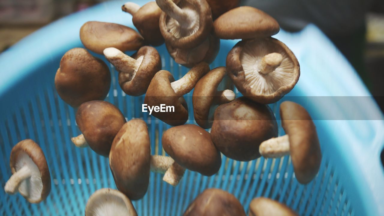 Close-Up Of Mushrooms In Mid-Air Against Blue Container