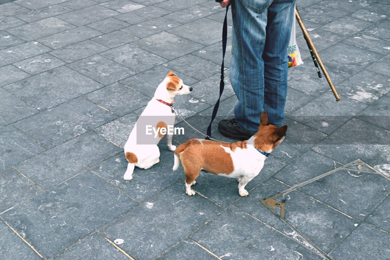dog, pets, pet leash, low section, domestic animals, animal themes, human leg, street, human body part, outdoors, sidewalk, mammal, one animal, dog lead, walking, day, standing, one person, road, adult, people