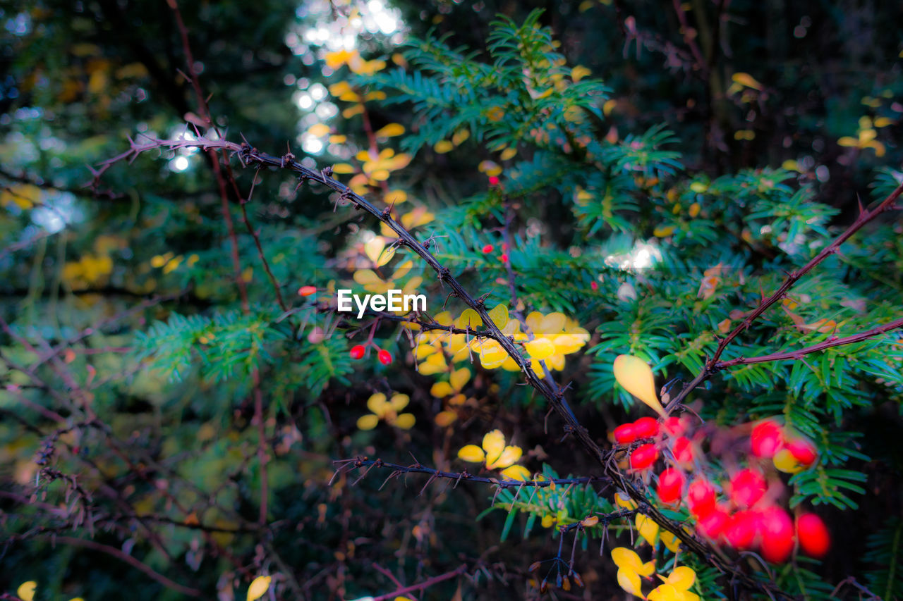 growth, nature, beauty in nature, flower, plant, freshness, no people, fragility, outdoors, green color, branch, day, tree, close-up