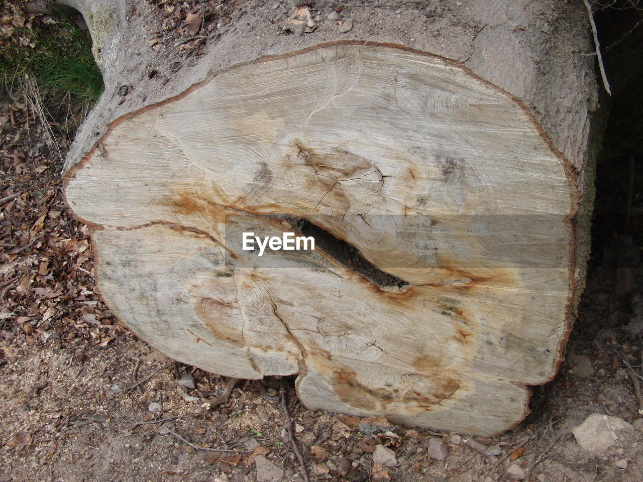 fossil, rock - object, nature, tree, no people, tree trunk, ancient, outdoors, day, forest, close-up