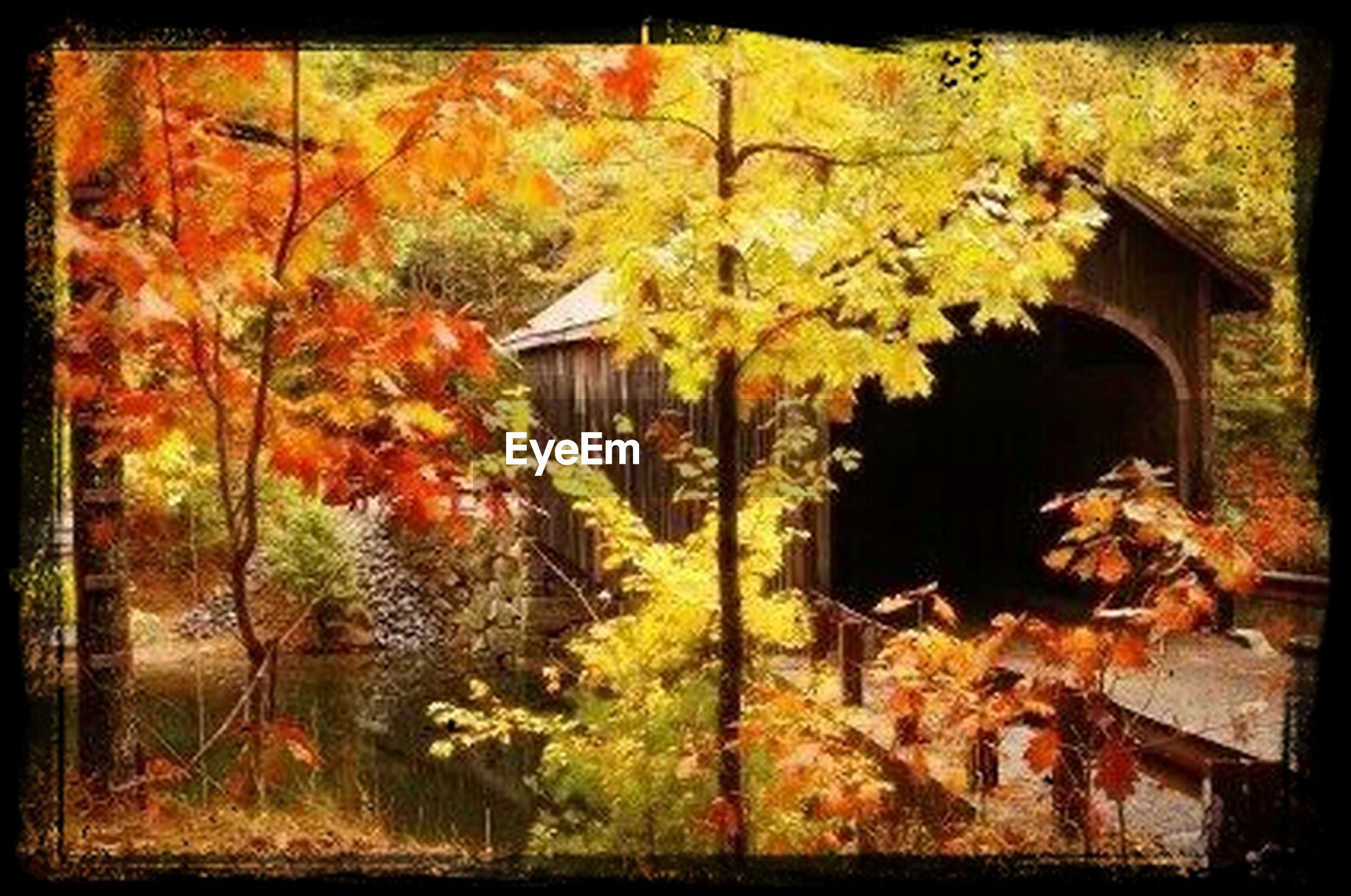 transfer print, auto post production filter, autumn, tree, change, built structure, house, building exterior, orange color, nature, architecture, wood - material, branch, outdoors, tree trunk, leaf, season, no people, day, growth