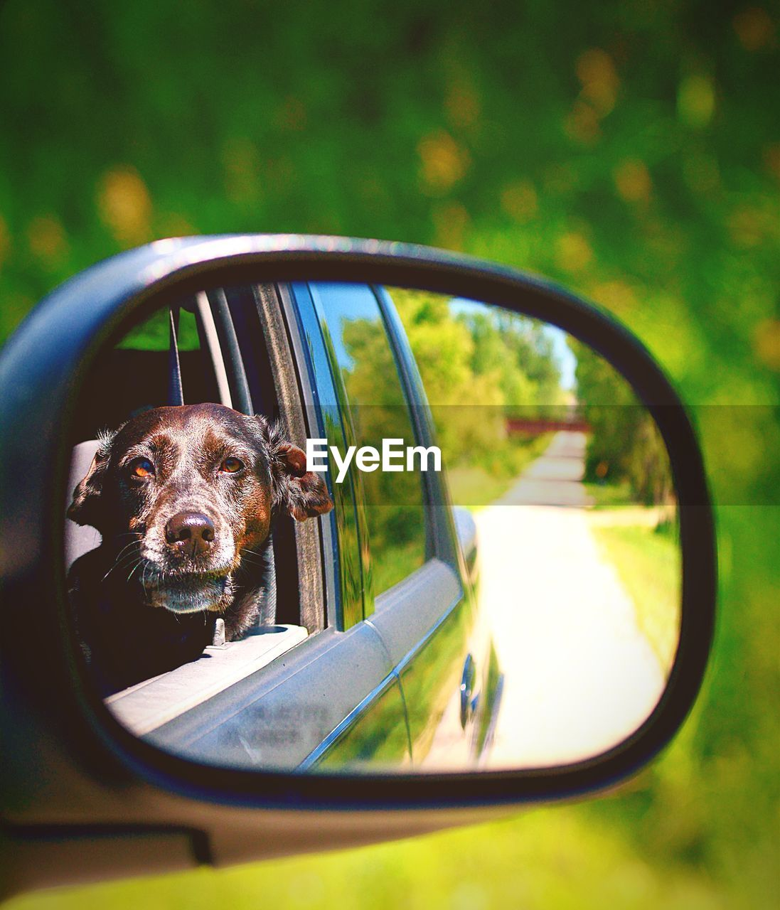 Reflection of dog in side-view mirror of car