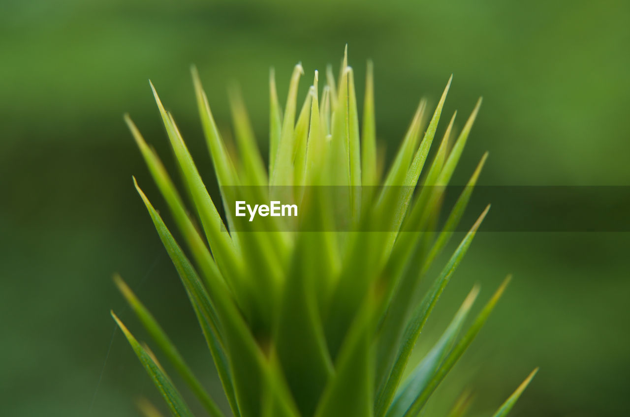 green color, growth, nature, close-up, focus on foreground, day, outdoors, plant, beauty in nature, no people, freshness