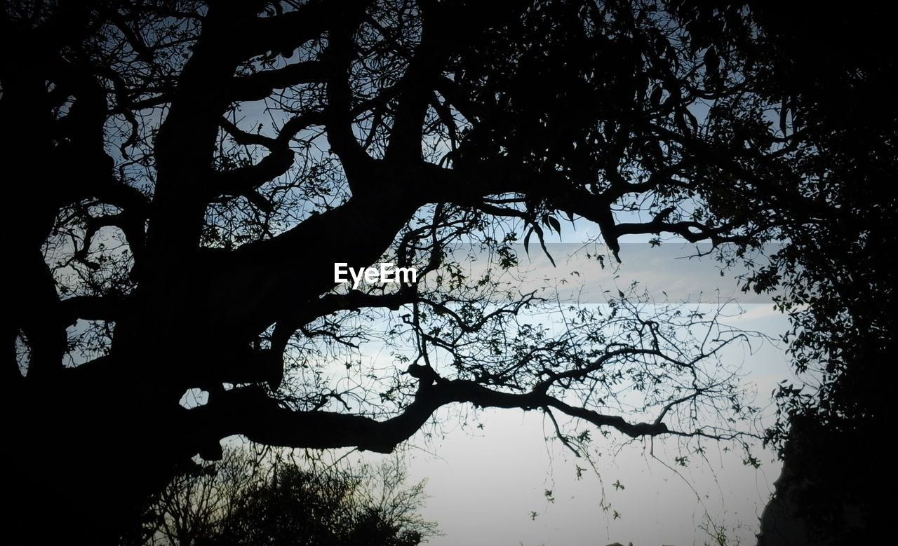 nature, tree, beauty in nature, silhouette, tranquility, branch, no people, forest, scenics, outdoors, growth, day, sky, water