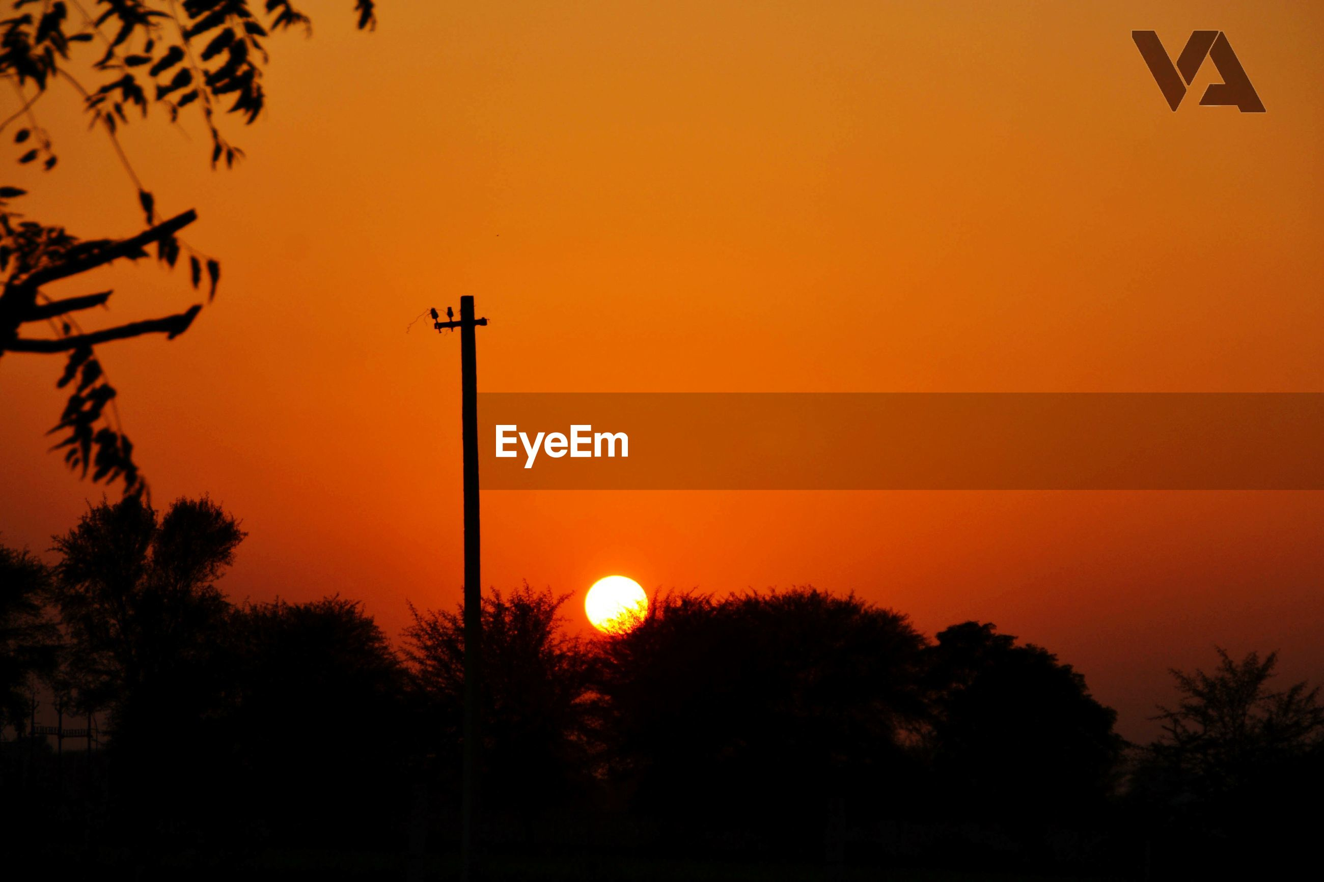 sunset, silhouette, orange color, tree, sun, beauty in nature, scenics, nature, street light, tranquility, sky, copy space, clear sky, idyllic, tranquil scene, low angle view, outdoors, no people, romantic sky, branch