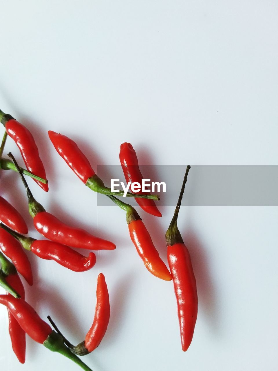 red, red chili pepper, chili pepper, pepper, studio shot, food and drink, white background, spice, freshness, food, vegetable, still life, indoors, close-up, no people, wellbeing, copy space, healthy eating, chili, ingredient