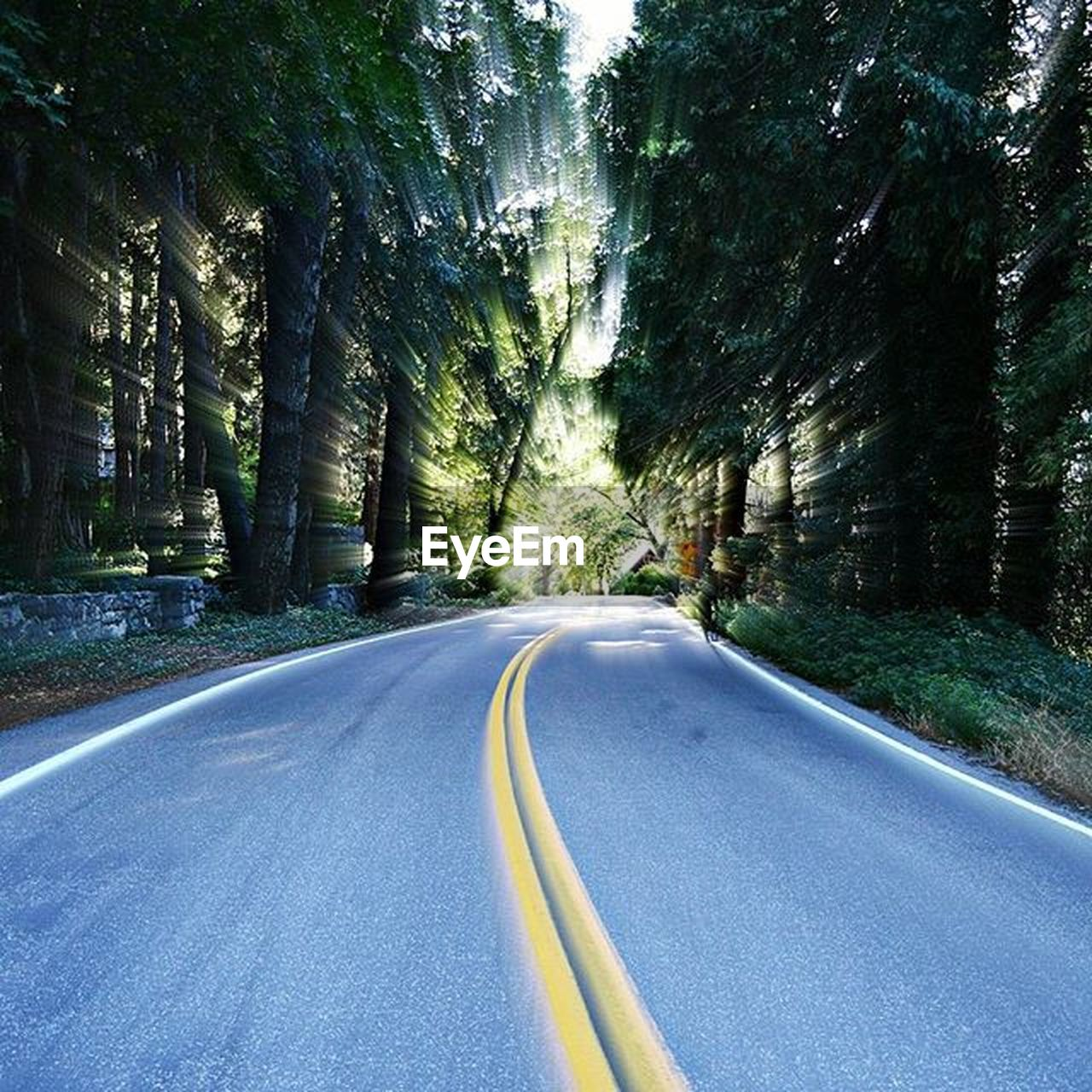 road, tree, the way forward, transportation, nature, day, no people, outdoors, scenics, beauty in nature