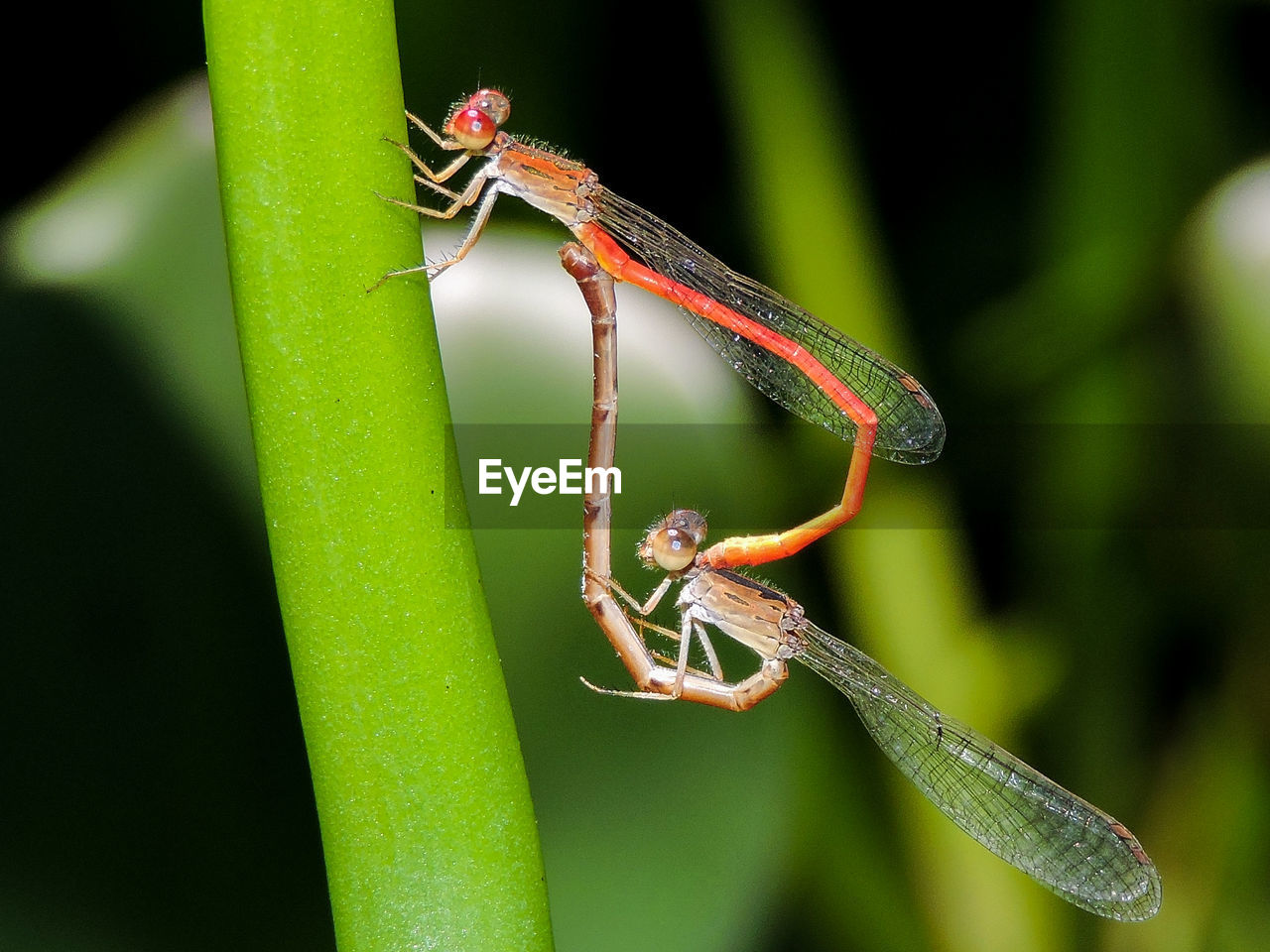 CLOSE-UP OF SPIDER ON STEM