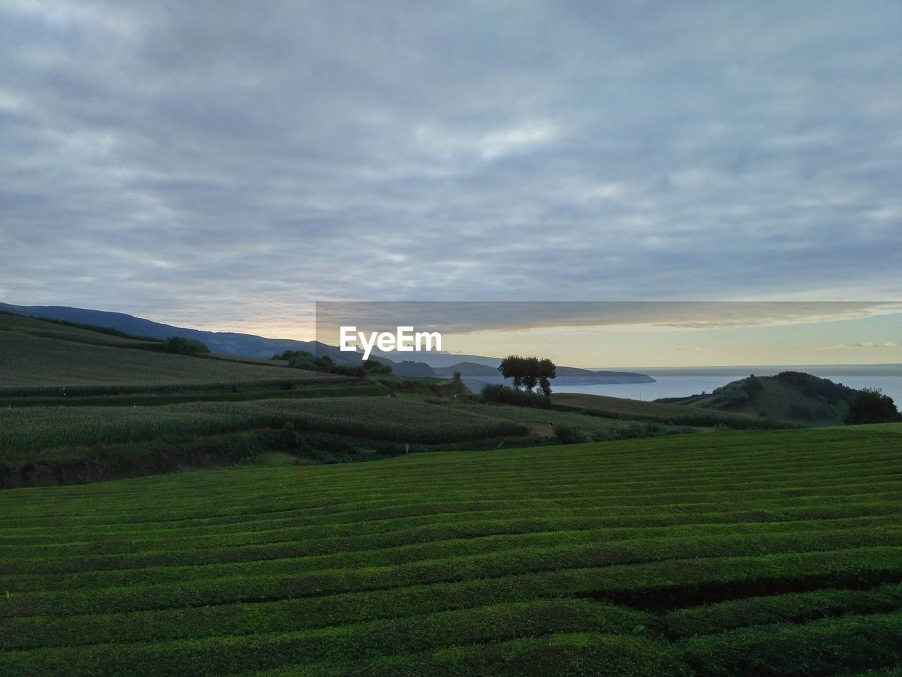 sky, scenics - nature, cloud - sky, tranquil scene, tranquility, environment, landscape, beauty in nature, land, field, agriculture, rural scene, plant, green color, nature, no people, growth, non-urban scene, grass, mountain, tea crop, plantation, rolling landscape