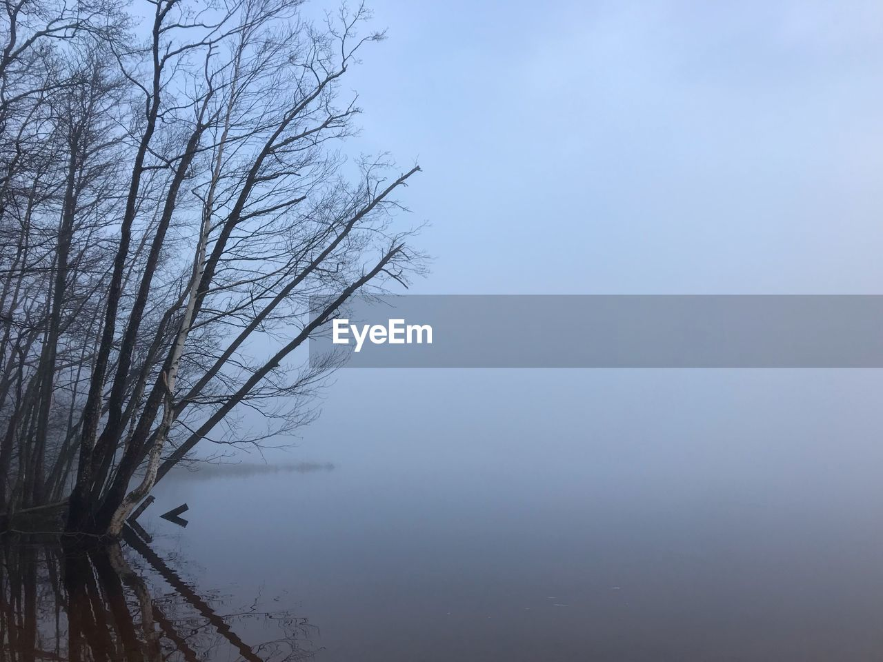 tree, water, tranquility, bare tree, beauty in nature, tranquil scene, sky, fog, plant, scenics - nature, lake, no people, nature, branch, reflection, day, non-urban scene, waterfront, outdoors, hazy