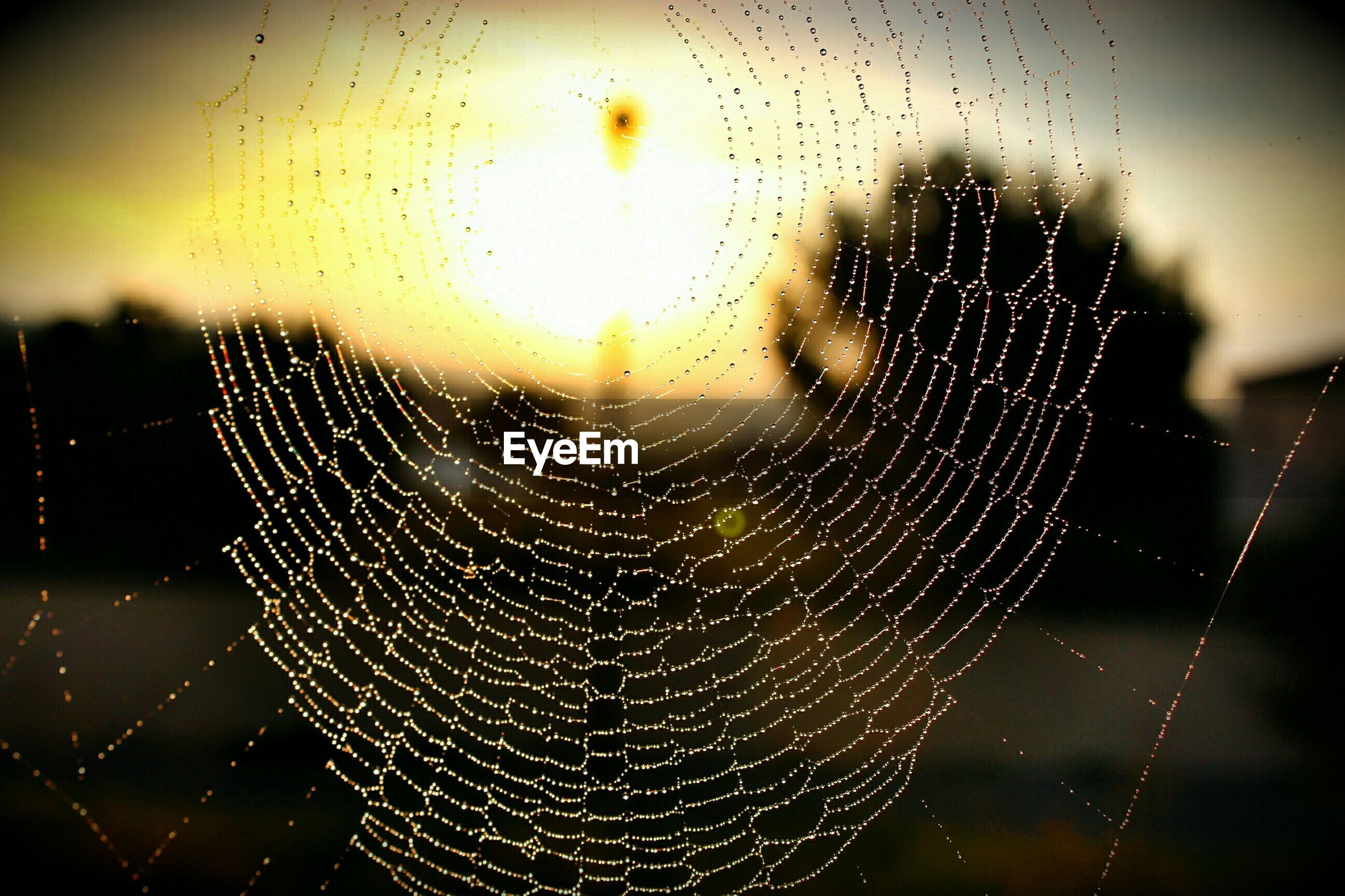 Close-up of wet spider web against sky during sunset