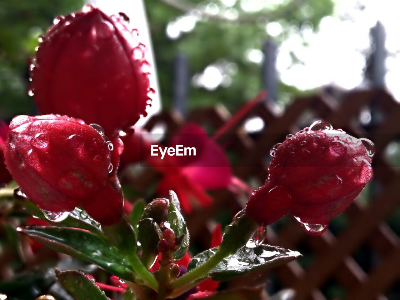 red, growth, nature, beauty in nature, close-up, fruit, freshness, no people, focus on foreground, plant, food and drink, outdoors, day, food, tree