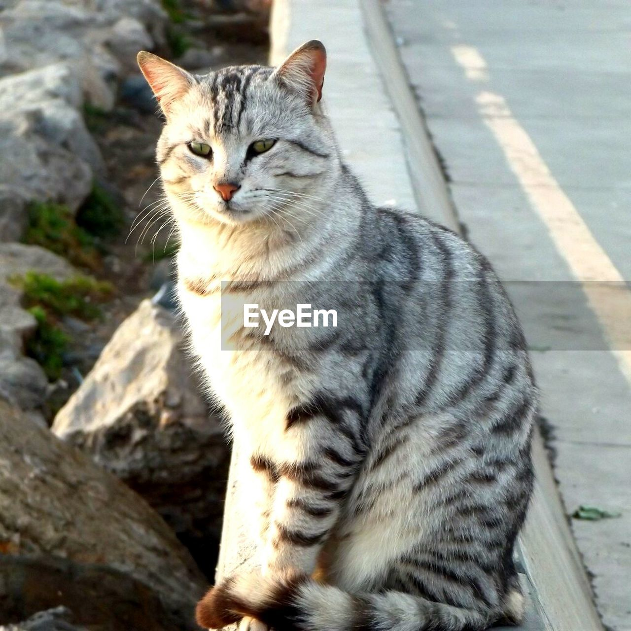 cat, mammal, feline, domestic cat, domestic, domestic animals, one animal, pets, vertebrate, no people, day, sitting, looking away, looking, focus on foreground, portrait, whisker, tabby