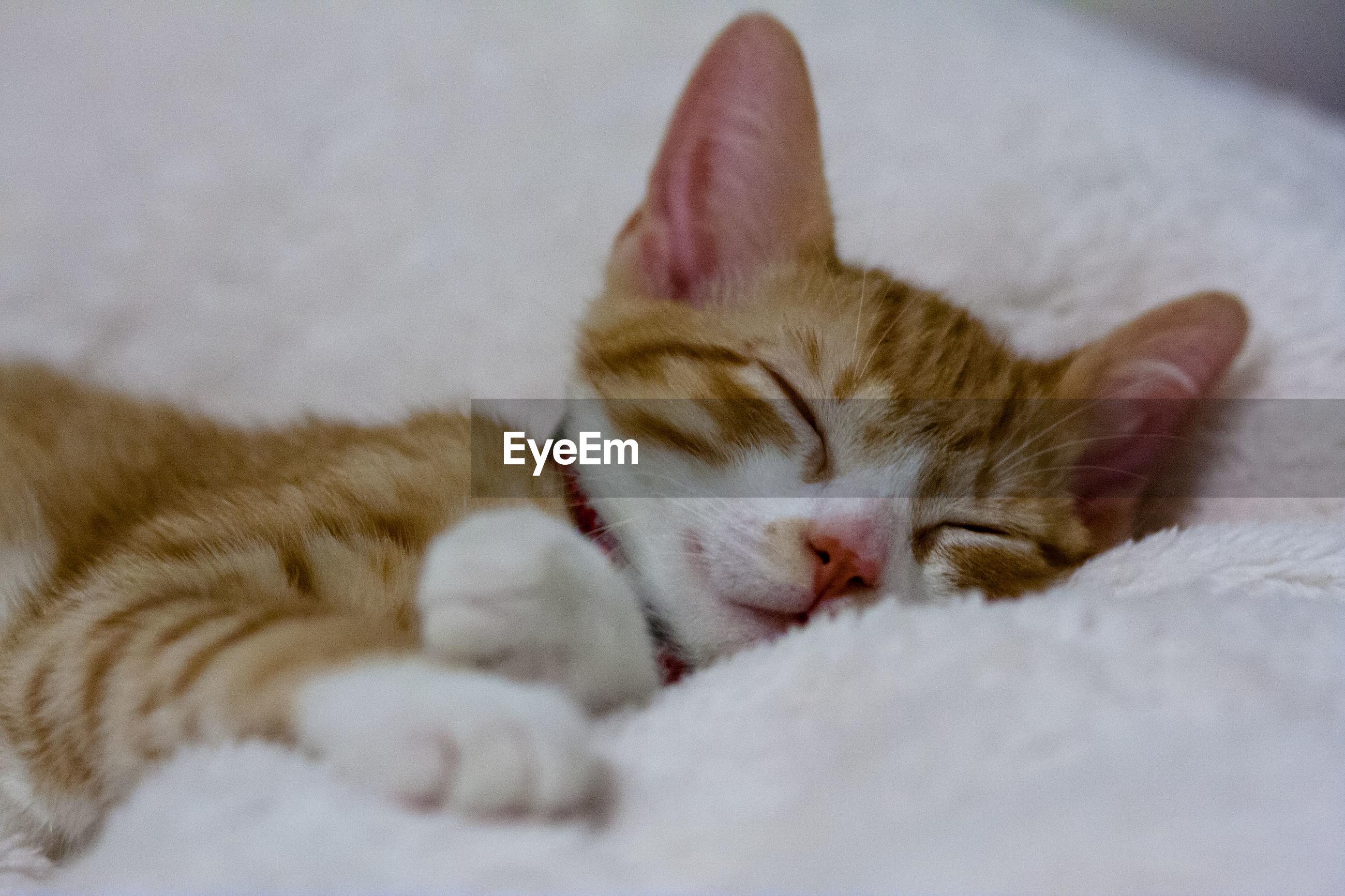 Cat sleeping on rug