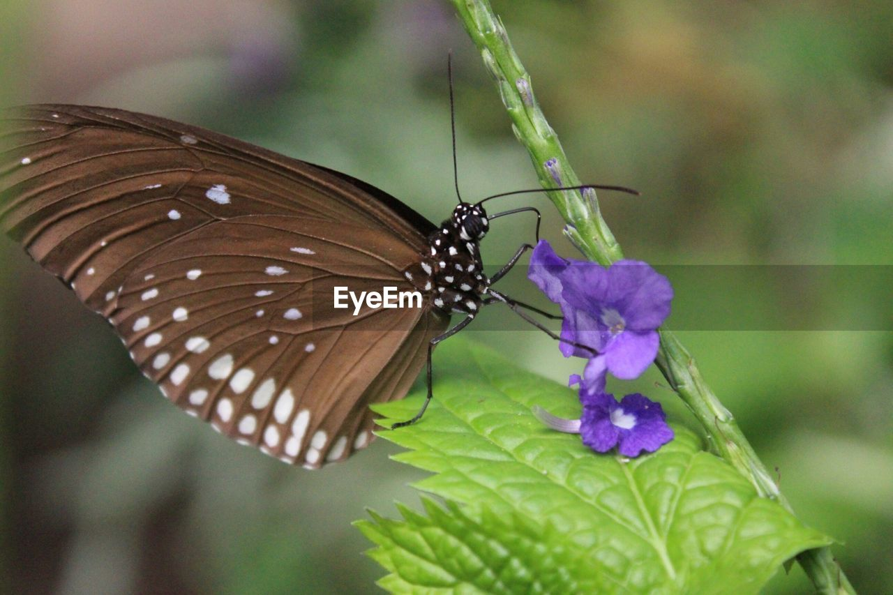 insect, butterfly - insect, animals in the wild, nature, one animal, animal themes, flower, butterfly, plant, fragility, growth, leaf, close-up, beauty in nature, freshness, outdoors, day, no people, pollination, flower head