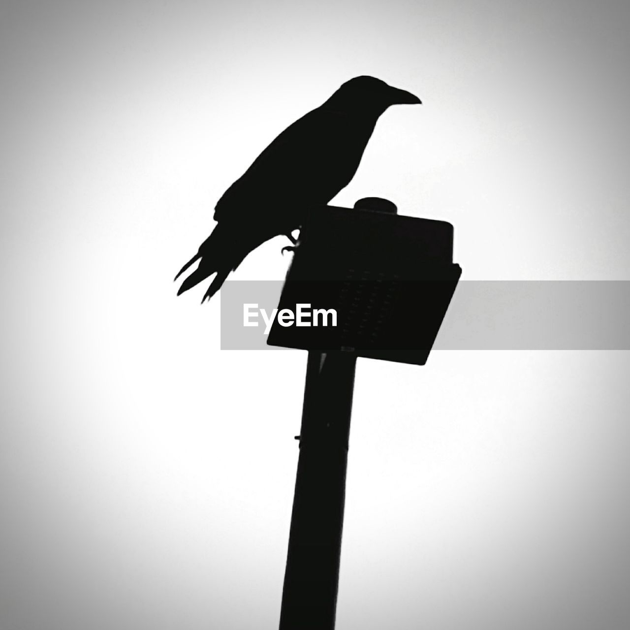 bird, animal themes, perching, animals in the wild, low angle view, one animal, crow, clear sky, animal wildlife, silhouette, raven - bird, no people, day, outdoors, nature, sky