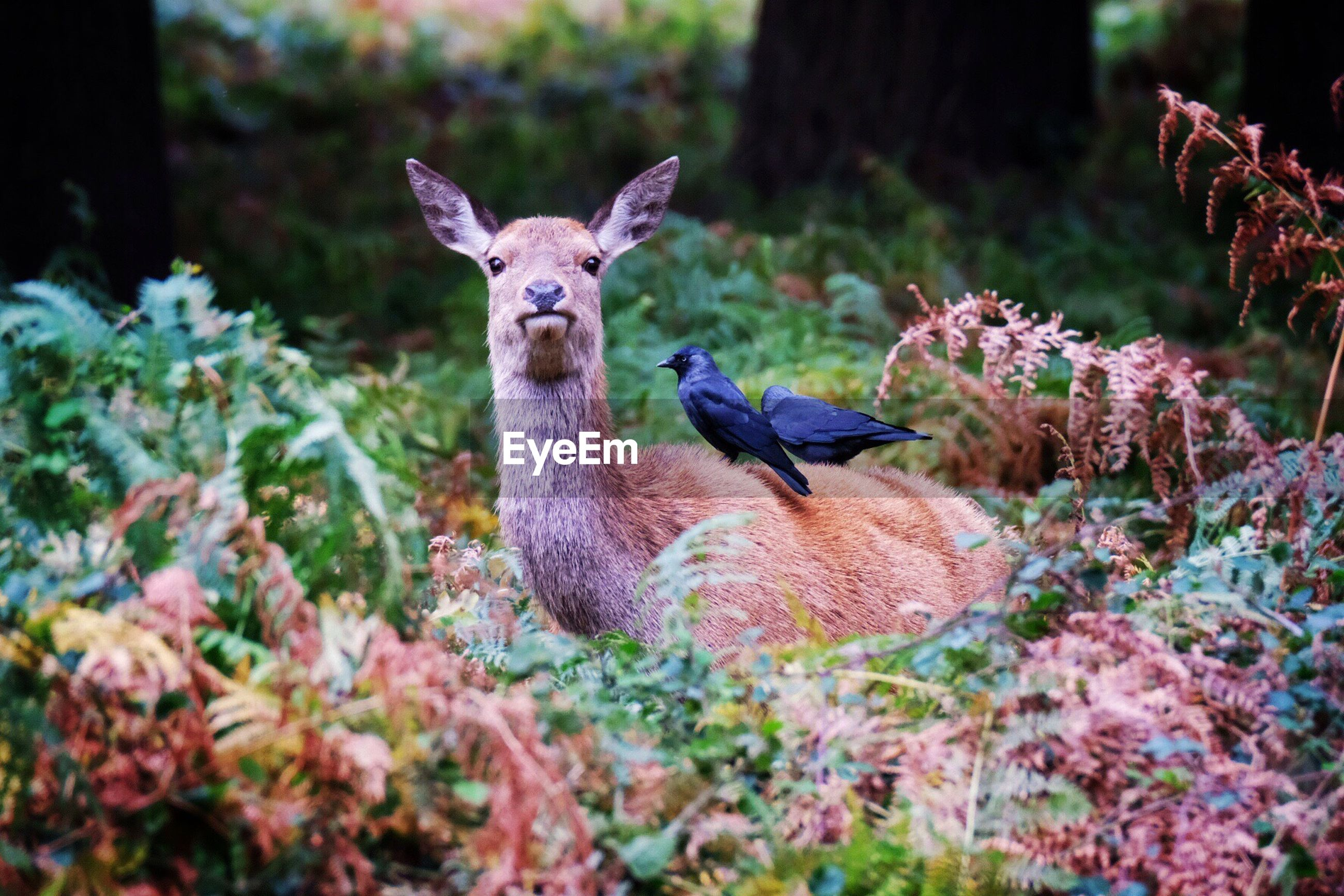Birds perching on deer amidst plants in forest