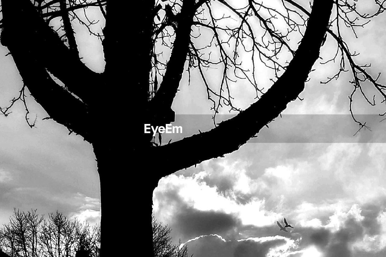 tree, sky, cloud - sky, silhouette, low angle view, plant, branch, nature, bare tree, trunk, tree trunk, no people, beauty in nature, tranquility, outdoors, day, growth, scenics - nature, tranquil scene, dusk