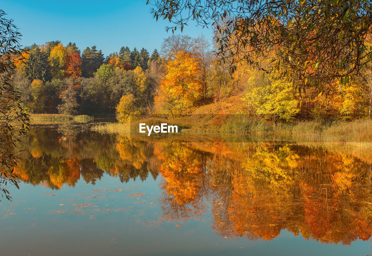 reflection, tree, lake, autumn, plant, water, beauty in nature, tranquility, waterfront, change, scenics - nature, tranquil scene, nature, growth, idyllic, orange color, no people, day, sky, outdoors, autumn collection, fall, reflection lake, natural condition