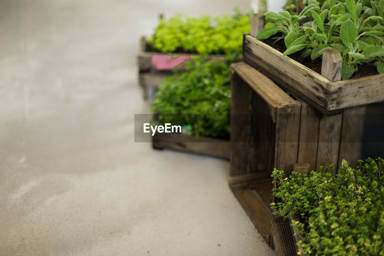 plant, green color, growth, no people, potted plant, nature, wood - material, leaf, plant part, day, freshness, outdoors, beauty in nature, container, in a row, food and drink, focus on foreground, healthy eating, close-up, vegetable, herb
