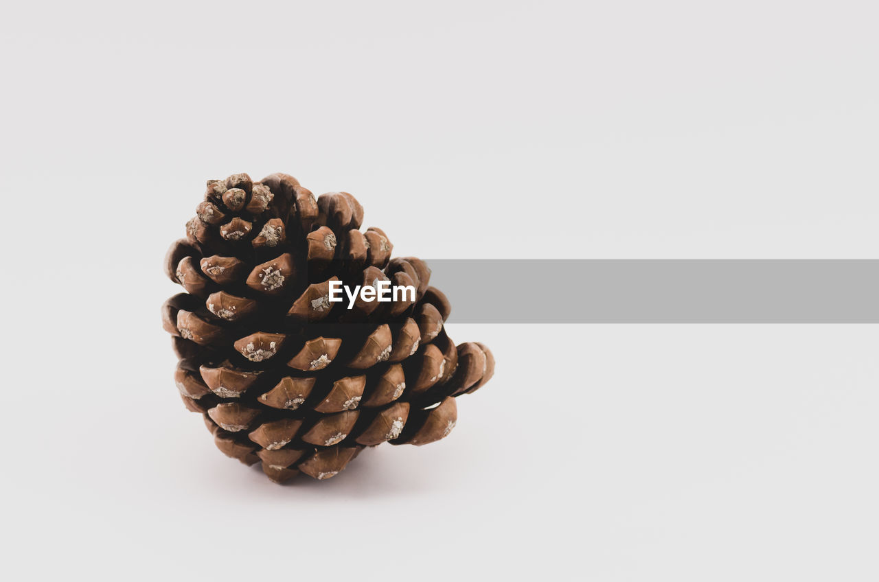 studio shot, white background, still life, copy space, indoors, food and drink, no people, freshness, brown, coffee - drink, roasted coffee bean, coffee, close-up, food, large group of objects, cut out, group of objects, directly above, high angle view, pine cone, coniferous tree, snack