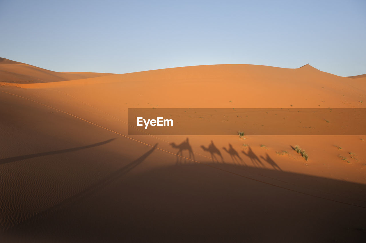 Shadow Of People Riding Camels In Desert