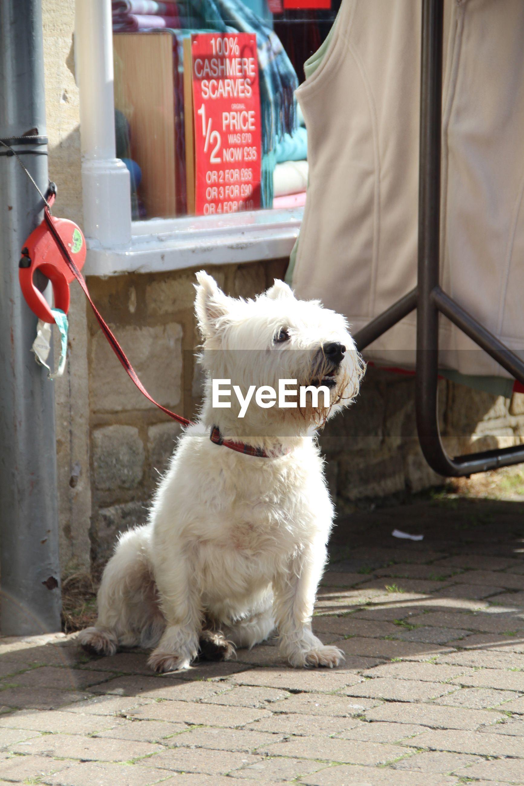Dog sitting on sidewalk