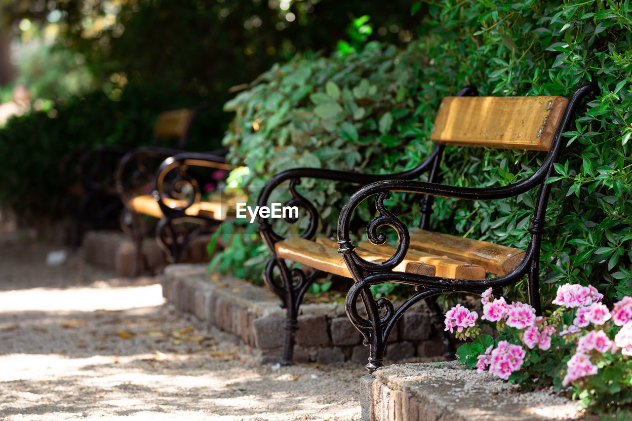 plant, nature, day, no people, growth, seat, outdoors, focus on foreground, flower, flowering plant, green color, absence, bench, tree, front or back yard, sunlight, bush, plant part, wood - material, garden