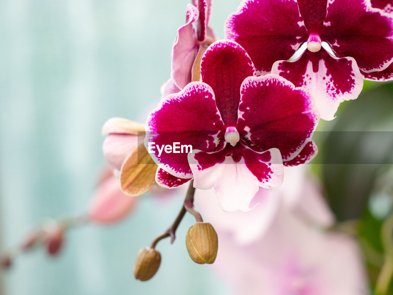 flowering plant, flower, plant, fragility, vulnerability, petal, beauty in nature, freshness, close-up, growth, focus on foreground, inflorescence, pink color, flower head, day, nature, no people, outdoors, selective focus, tree, pollen