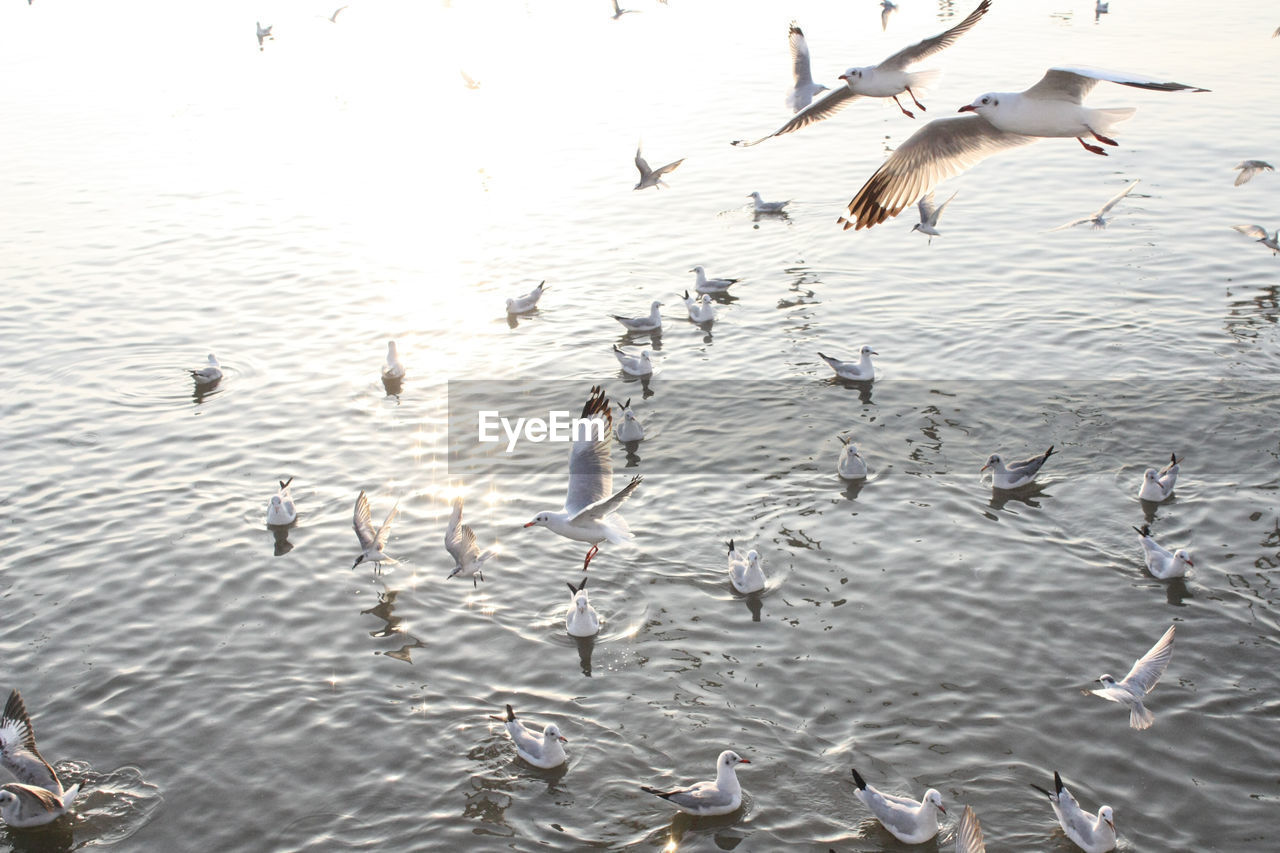animals in the wild, animal themes, bird, flying, animal wildlife, large group of animals, spread wings, nature, no people, water, lake, day, flock of birds, outdoors, seagull, togetherness, beauty in nature