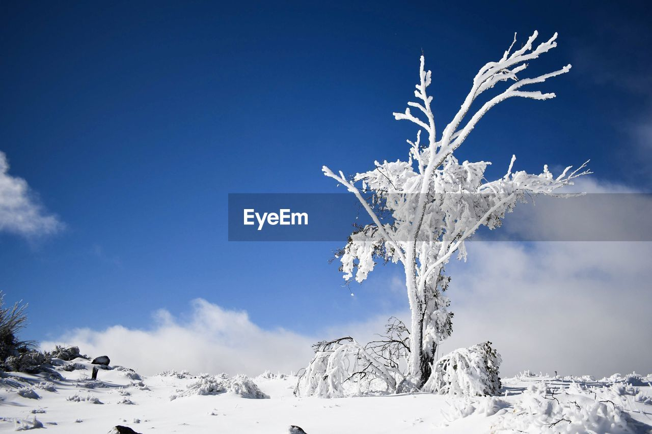 cold temperature, snow, winter, sky, beauty in nature, scenics - nature, tranquility, nature, tree, tranquil scene, no people, covering, white color, frozen, cloud - sky, non-urban scene, plant, blue, day, outdoors, snowcapped mountain, powder snow