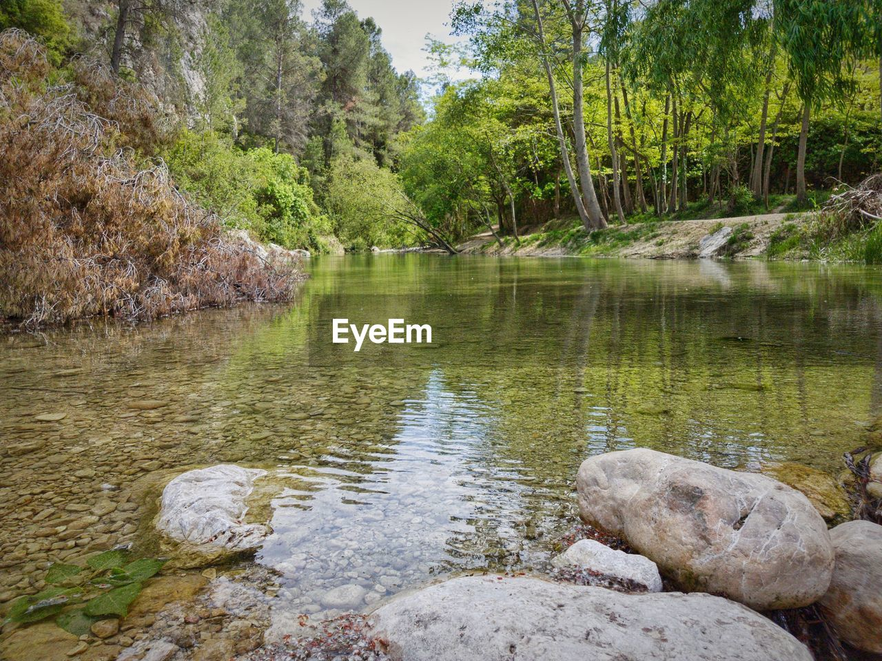 water, nature, tranquility, tranquil scene, tree, beauty in nature, lake, scenics, reflection, rock - object, outdoors, no people, day, green color, forest, growth, travel destinations, landscape, grass, sky