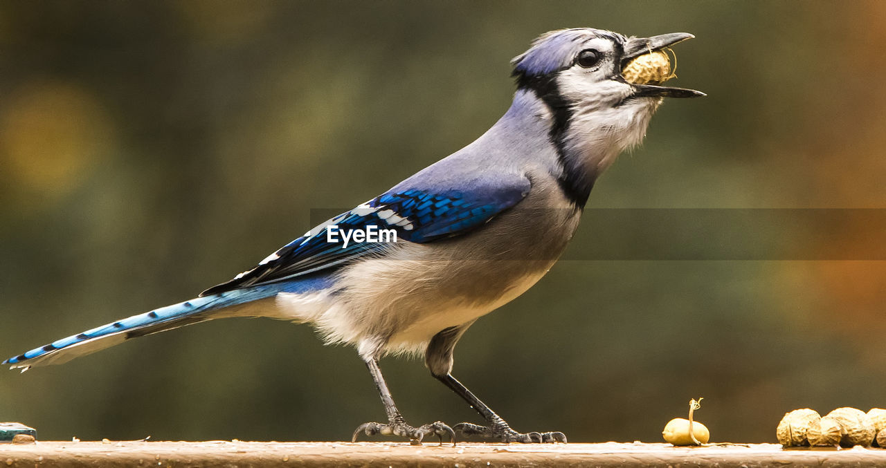 bird, one animal, vertebrate, animals in the wild, animal wildlife, perching, focus on foreground, close-up, day, no people, full length, looking away, nature, looking, outdoors, sunlight, side view