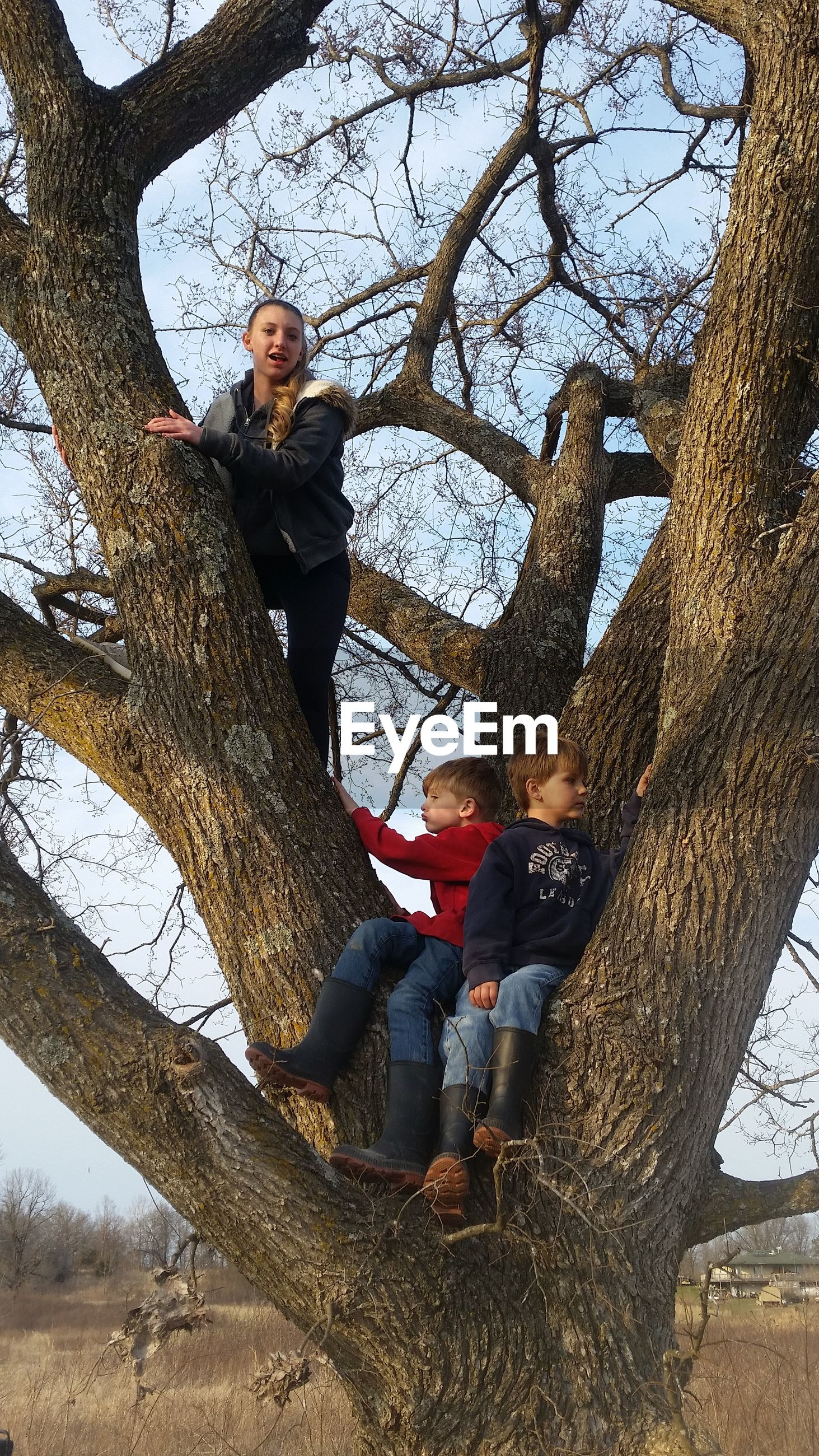 Low angle view of people sitting on tree trunk