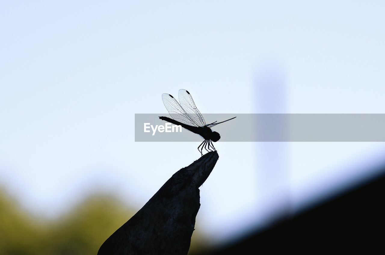 day, sky, animal, animal themes, no people, nature, one animal, close-up, low angle view, copy space, animals in the wild, insect, focus on foreground, outdoors, animal wildlife, invertebrate, selective focus, mid-air, animal wing, clear sky, butterfly - insect