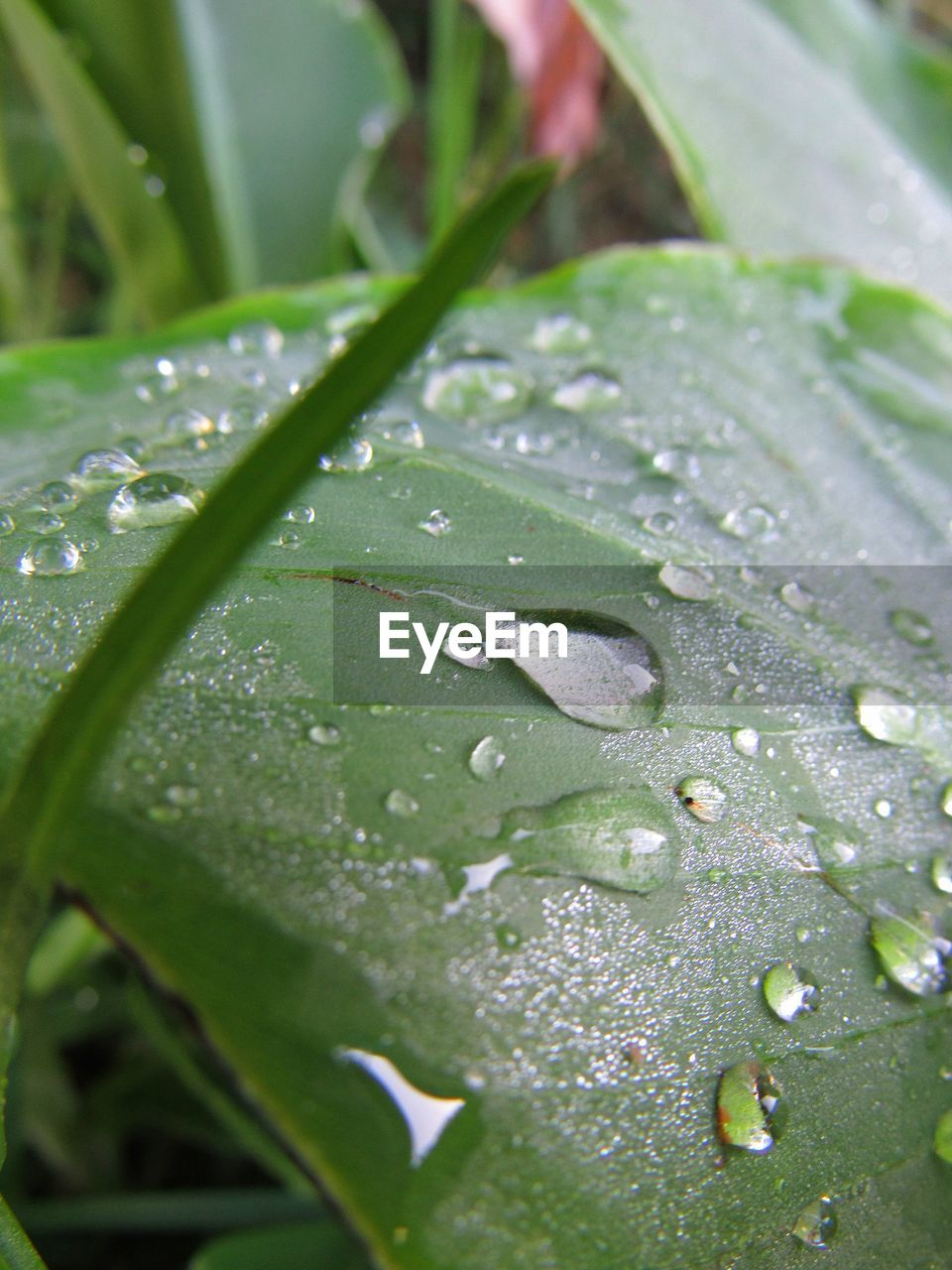 drop, wet, water, close-up, leaf, plant part, plant, growth, green color, nature, beauty in nature, rain, no people, day, selective focus, freshness, raindrop, outdoors, purity, dew, leaves, blade of grass, focus