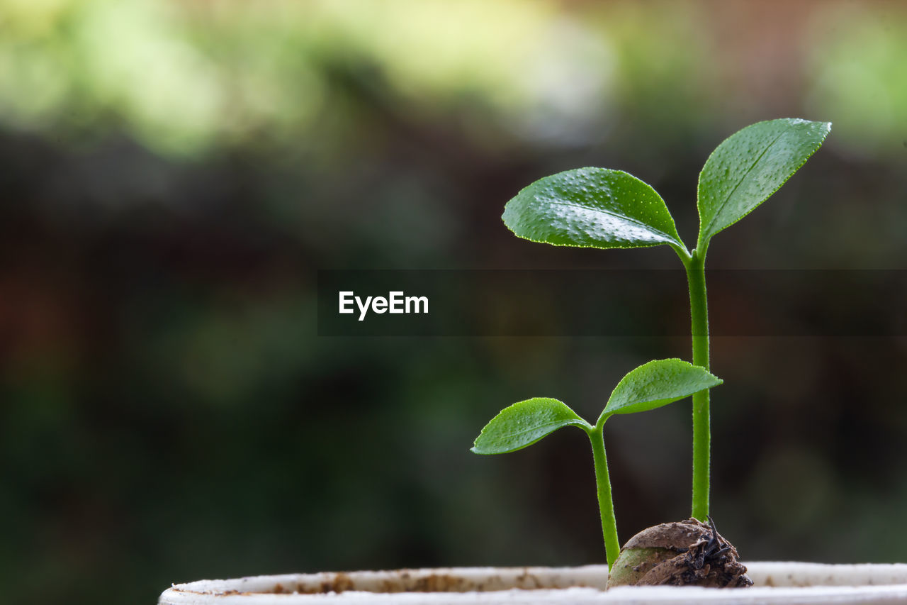 growth, plant part, leaf, green color, plant, focus on foreground, beginnings, close-up, nature, beauty in nature, no people, new life, seedling, day, vulnerability, fragility, outdoors, sapling, selective focus, freshness, small