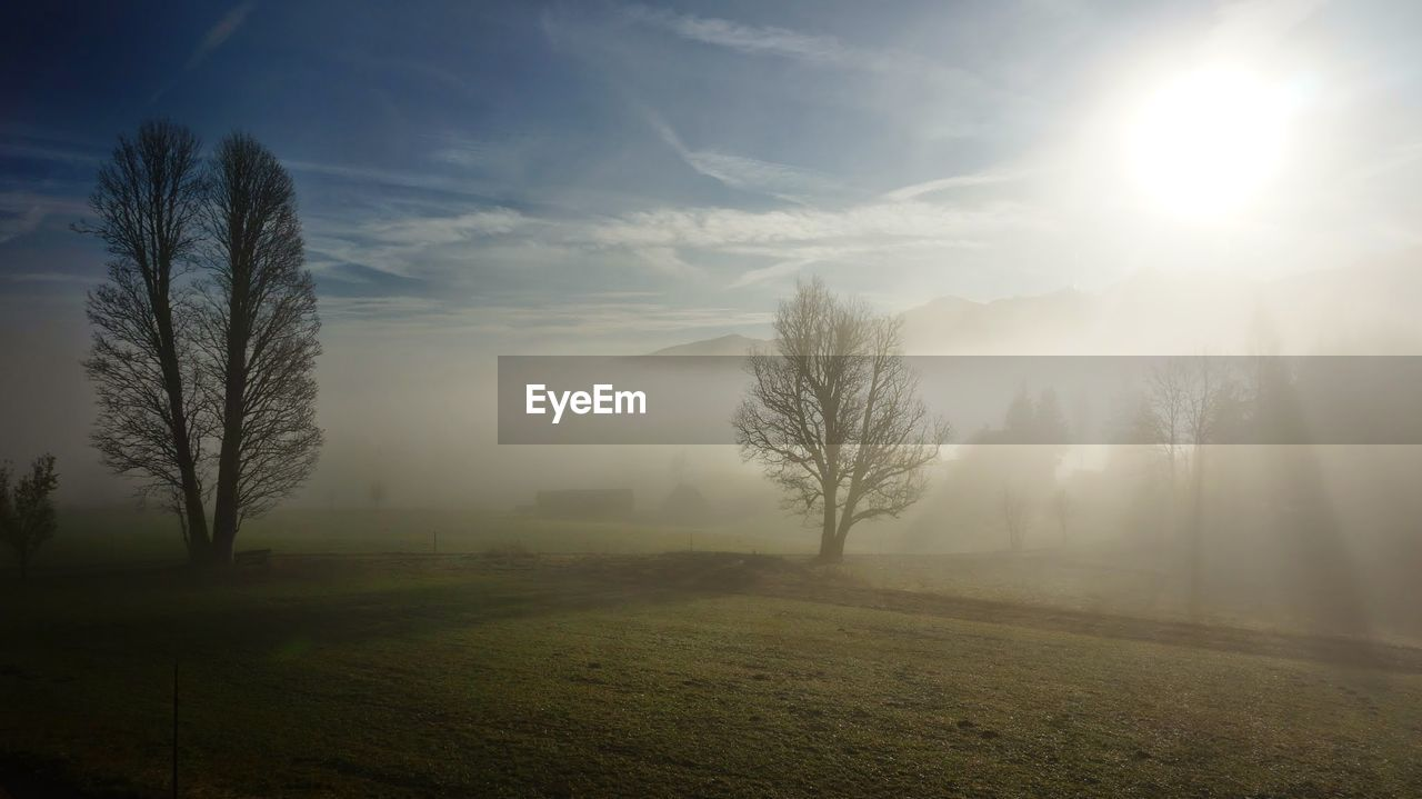 landscape, beauty in nature, nature, tranquility, tranquil scene, field, fog, scenics, tree, no people, outdoors, sun, sky, day, grass