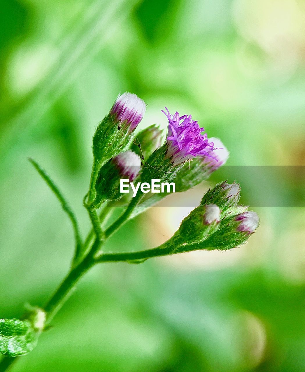 flower, fragility, nature, beauty in nature, petal, freshness, plant, growth, flower head, no people, outdoors, close-up, green color, day, blooming