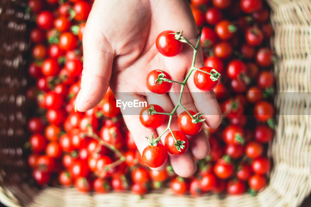 red, human hand, one person, human body part, healthy eating, real people, food and drink, hand, food, fruit, finger, human finger, wellbeing, freshness, body part, holding, close-up, women, large group of objects, ripe, rowanberry