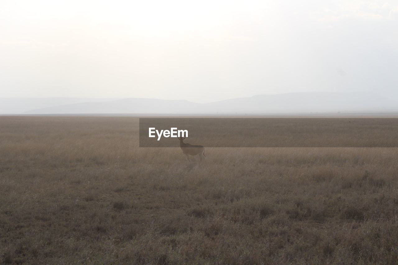 VIEW OF A FIELD