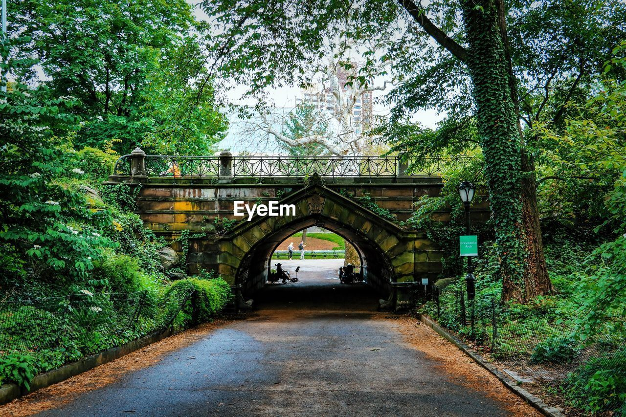 tree, plant, architecture, bridge, connection, built structure, arch, bridge - man made structure, no people, day, transportation, direction, nature, the way forward, green color, growth, outdoors, diminishing perspective, forest, old, arched, arch bridge