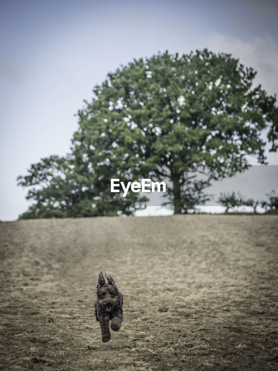 tree, one animal, plant, pets, domestic, domestic animals, animal themes, mammal, animal, sky, vertebrate, nature, field, land, canine, day, dog, no people, focus on foreground, growth, outdoors