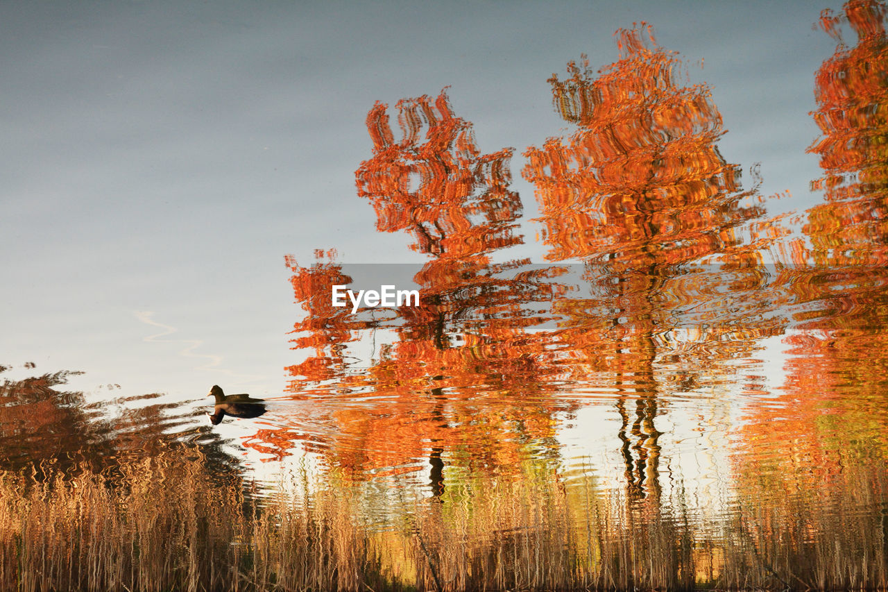 water, reflection, sky, plant, lake, orange color, nature, beauty in nature, autumn, tree, tranquility, growth, change, day, outdoors, no people, waterfront, scenics - nature, cloud - sky