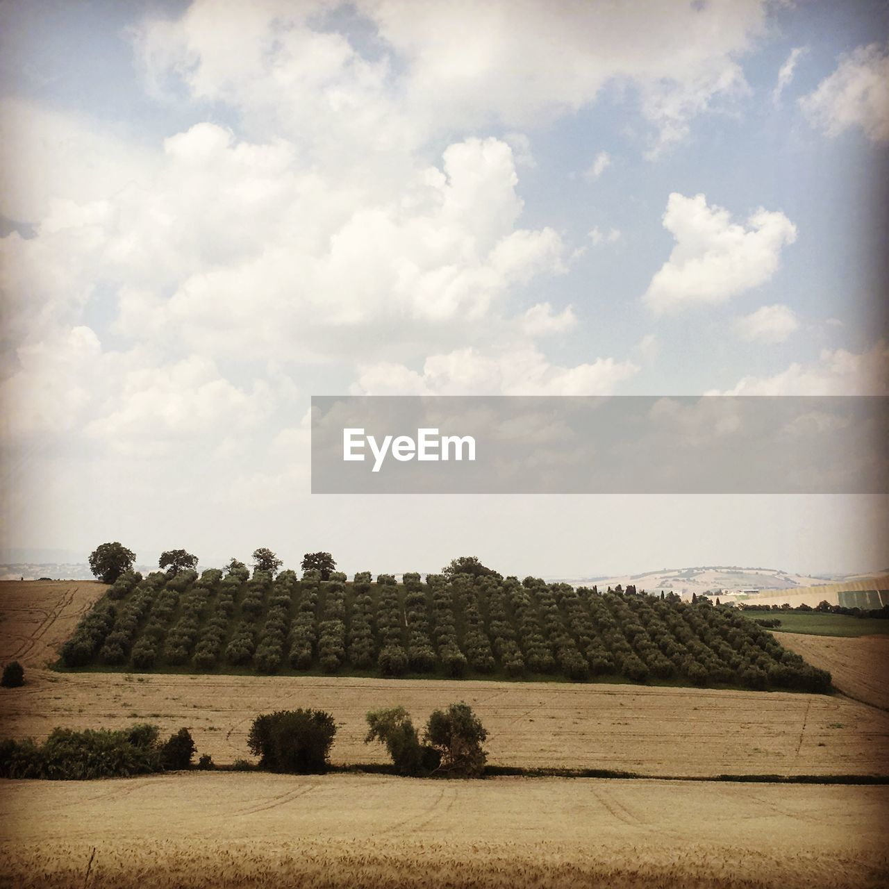 landscape, sky, field, cloud - sky, day, no people, outdoors, nature, beauty in nature, tree