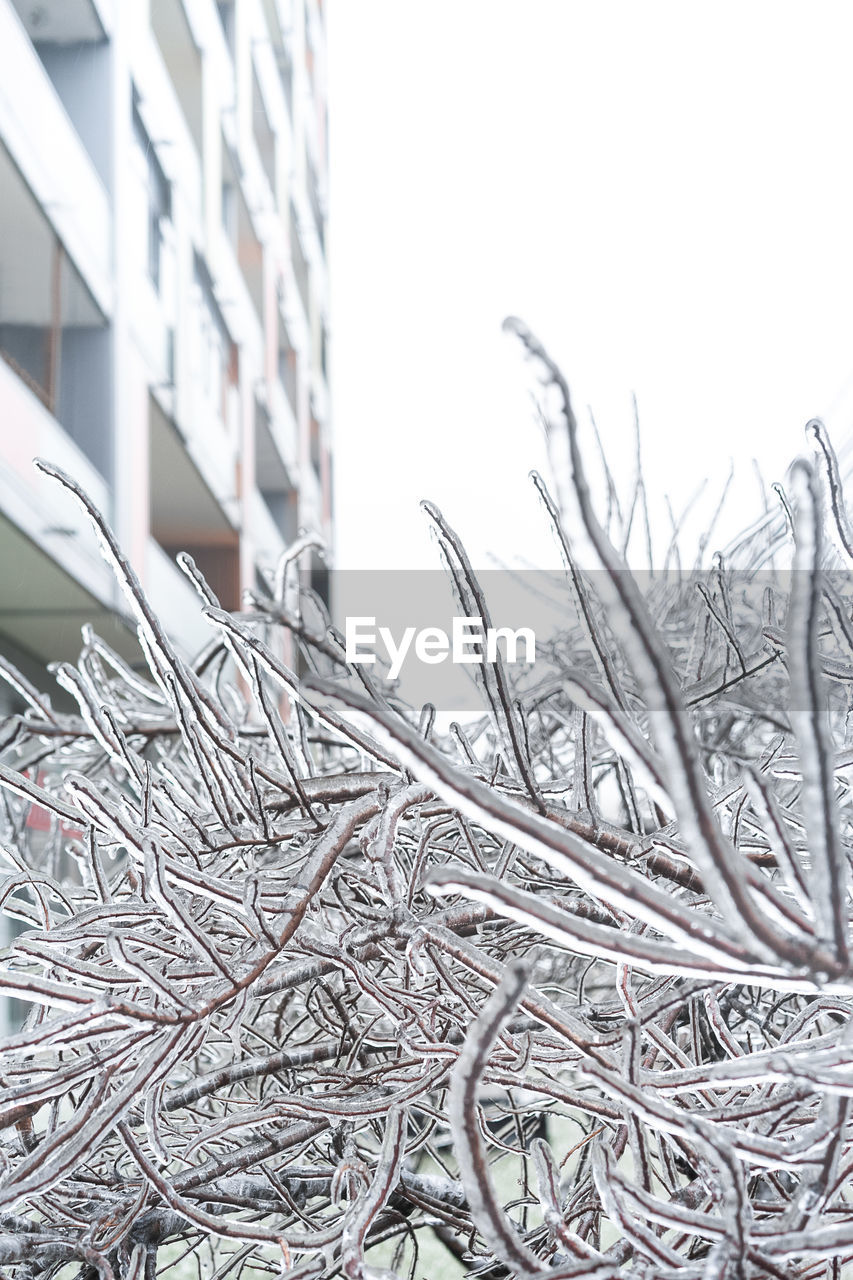 built structure, no people, building exterior, architecture, day, nature, close-up, winter, plant, outdoors, focus on foreground, cold temperature, sky, snow, stack, selective focus, metal, tree, large group of objects, complexity, apartment, tangled