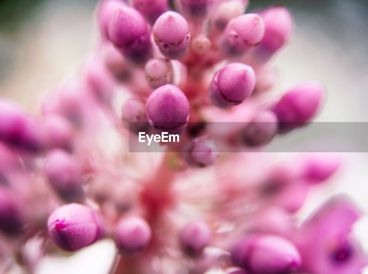 growth, nature, plant, flower, fragility, close-up, beauty in nature, pink color, no people, freshness, outdoors, day