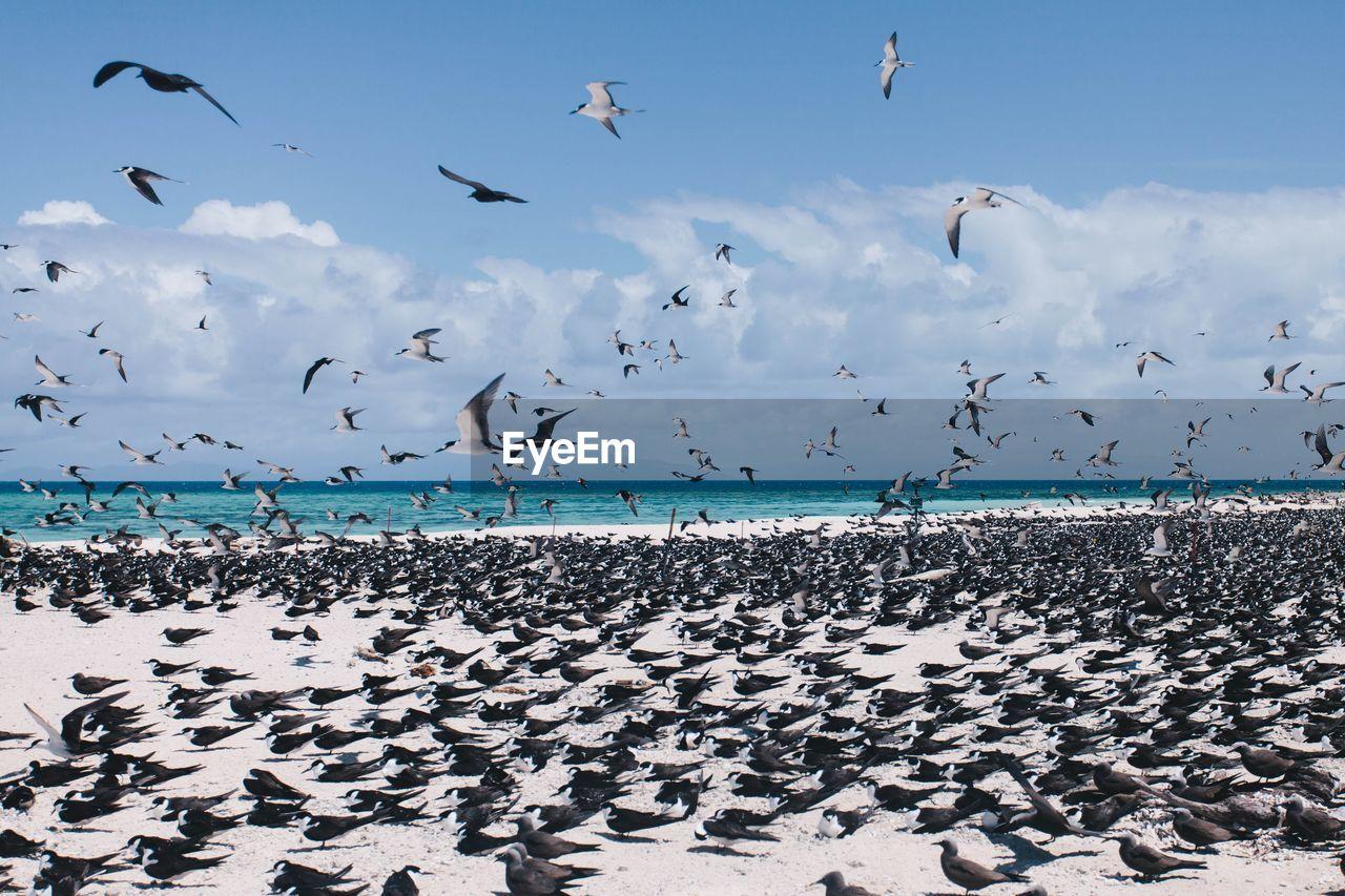 Abundance birds at beach
