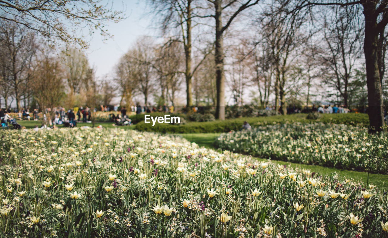 plant, tree, flower, flowering plant, growth, nature, day, park, grass, beauty in nature, incidental people, field, land, park - man made space, freshness, landscape, outdoors, real people, group of people, springtime